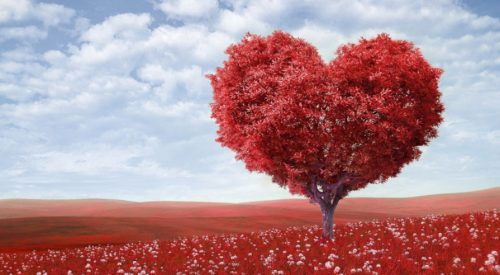 San Valentino - L'amore per Rosamunde Pilcher