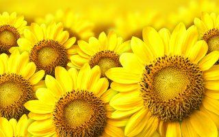 Libri a colori: il giallo