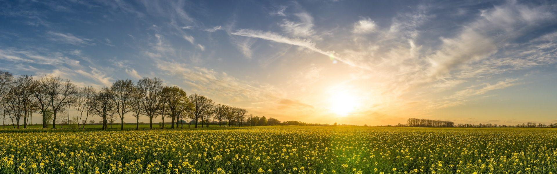 Audiolibri di primavera